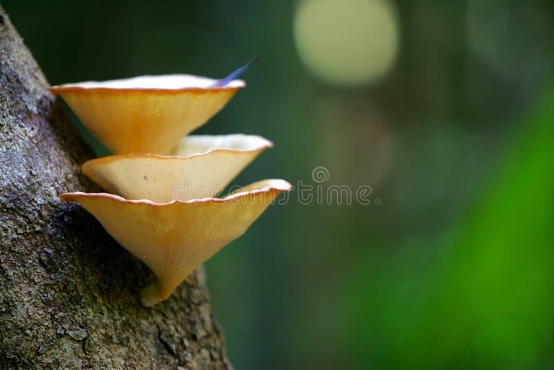热带的真菌 免版税库存照片