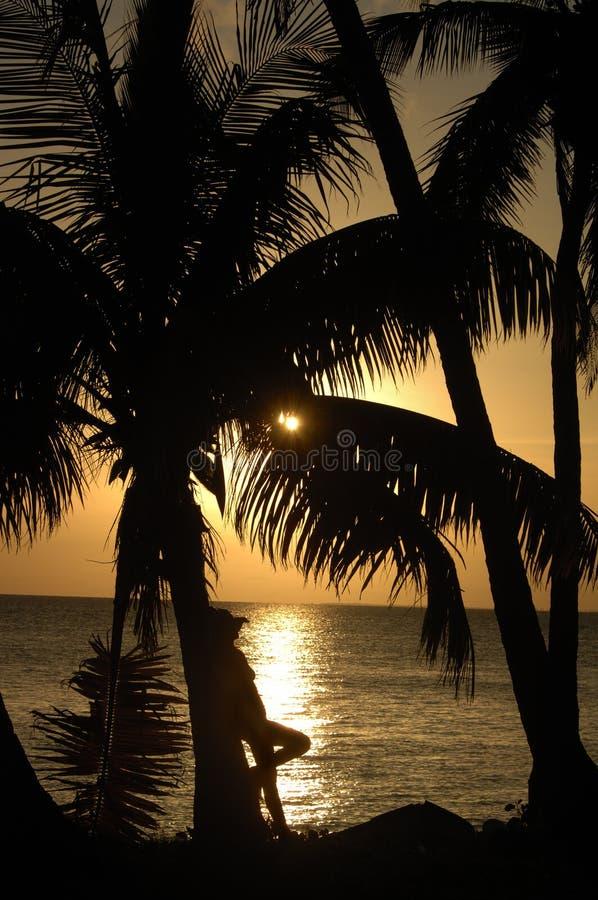 热带的秀丽 库存照片