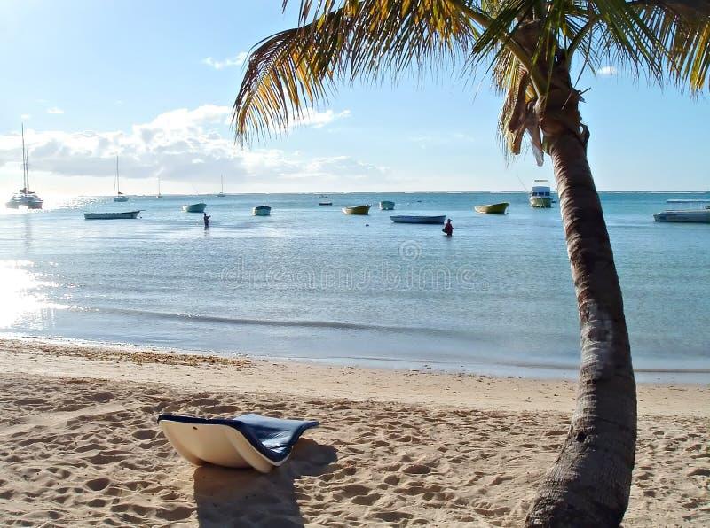 热带的系列 免版税库存图片