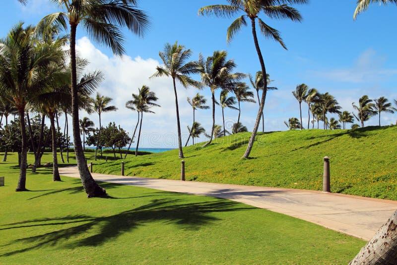热带的背景 免版税库存图片