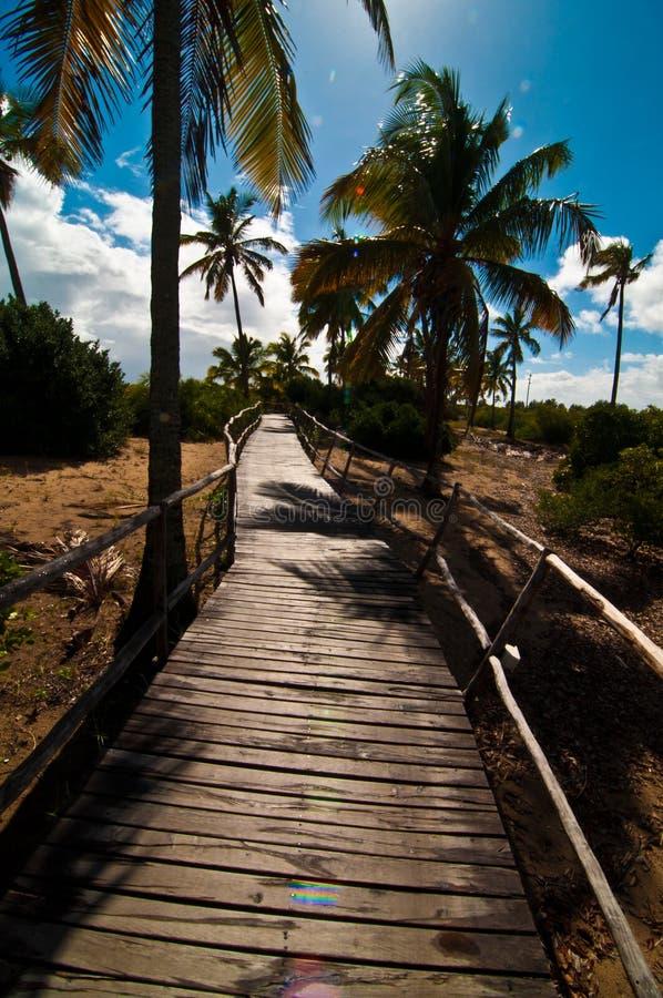 热带的路径 库存图片