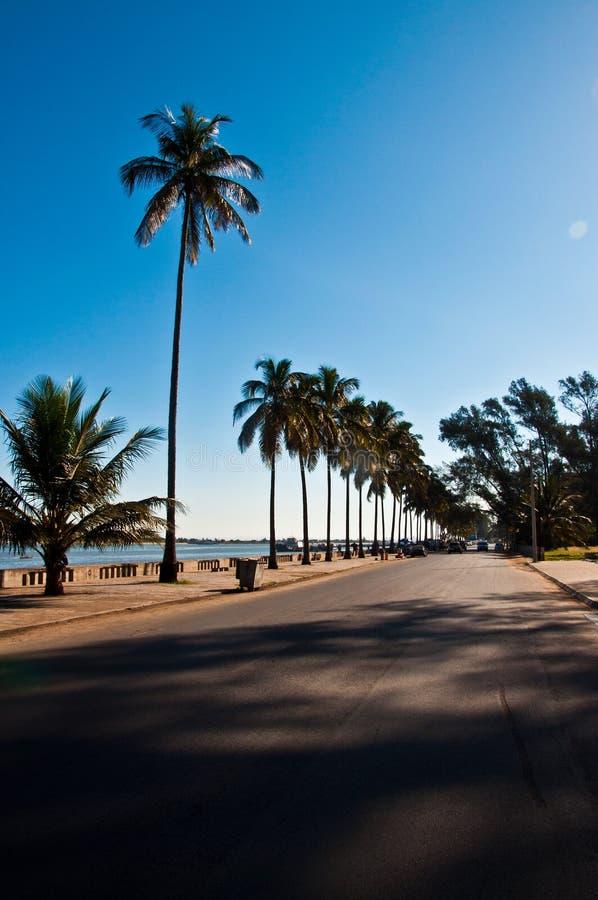 热带的路 免版税库存图片
