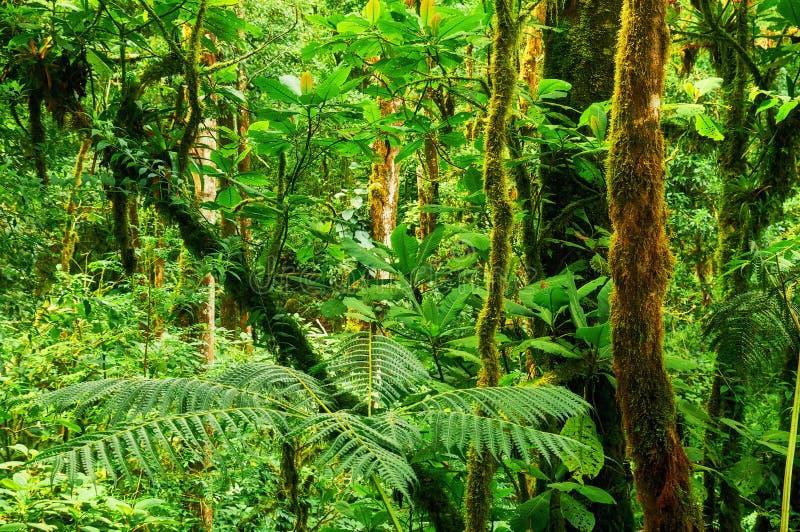 热带的雨林 库存图片