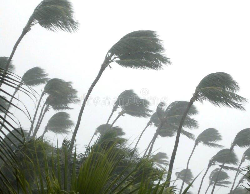 热带的风暴 库存照片