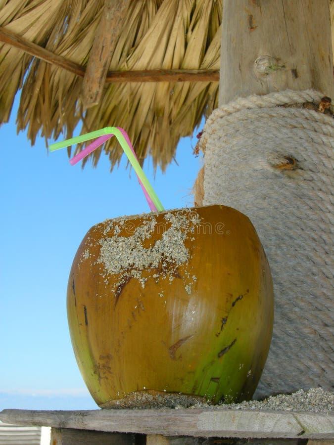 热带的饮料 免版税库存照片