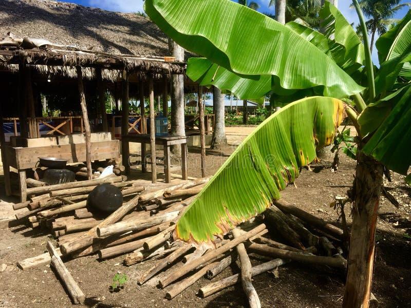 热带种子 免版税图库摄影