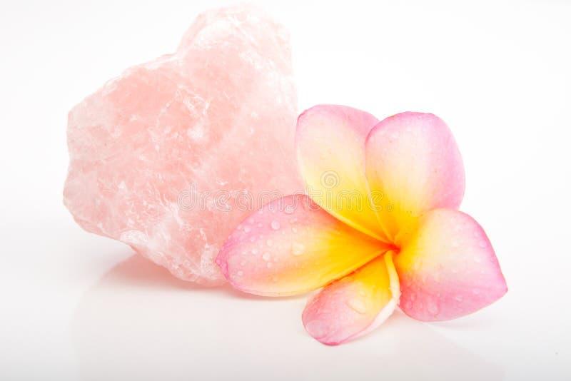 热带粉红彩笔和黄色赤素馨花开花与罗斯Quar 库存照片