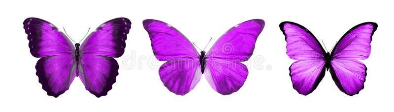 热带紫罗兰色蝴蝶 查出在白色 向量例证