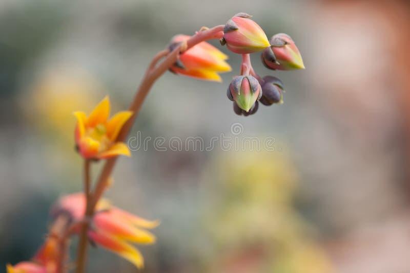 热带红色花植物宏指令视图 选择聚焦,您的文本的拷贝空间 浅深度领域照片 库存图片
