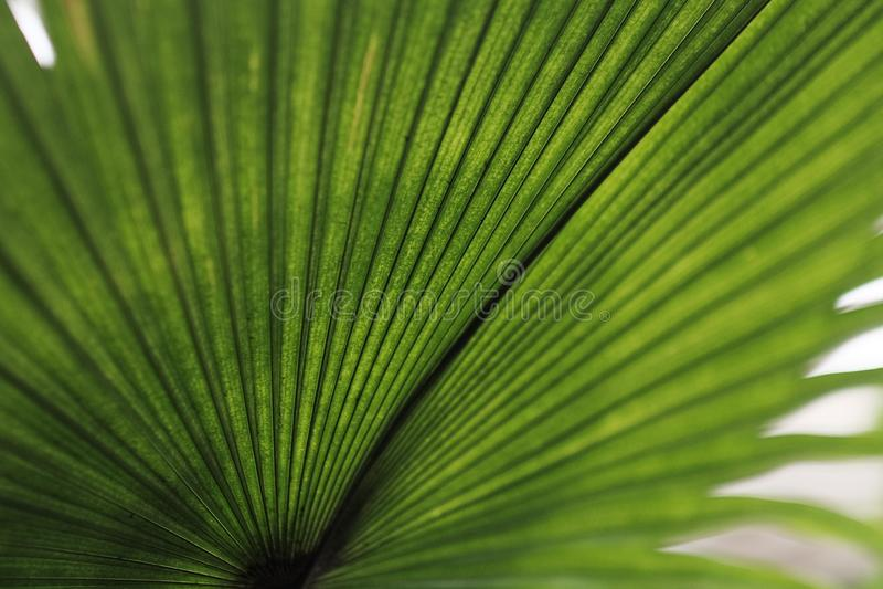 热带绿色叶子背景 库存照片