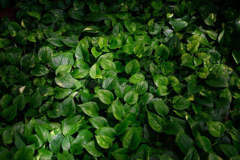 热带绿色在自然光和阴影离开 免版税库存照片