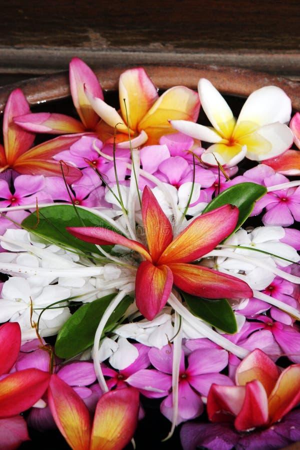 热带美丽的花 库存照片