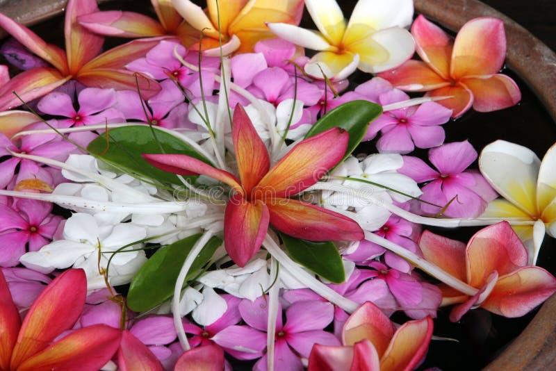热带美丽的花 免版税库存照片