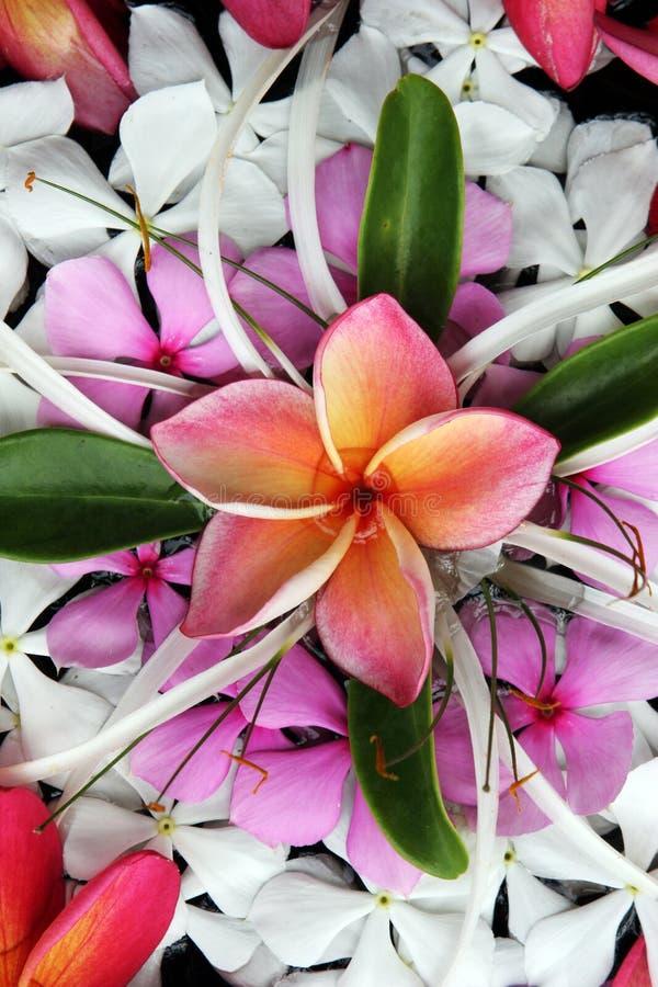 热带美丽的花 免版税库存图片