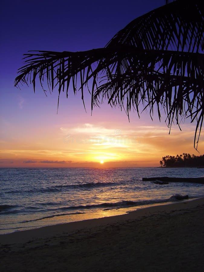 热带美好的日落 免版税库存图片