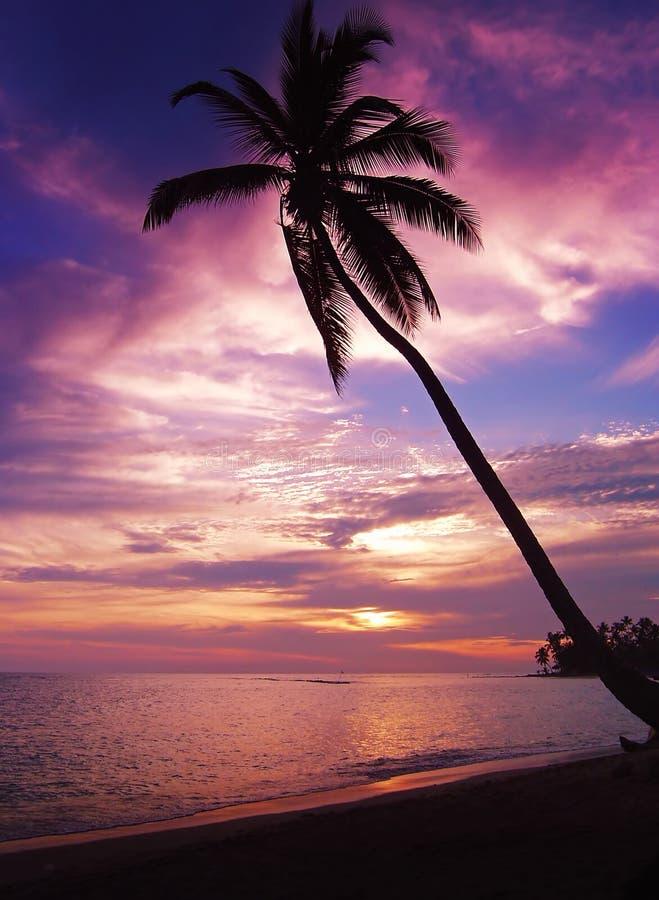 热带美好的日落 免版税库存照片