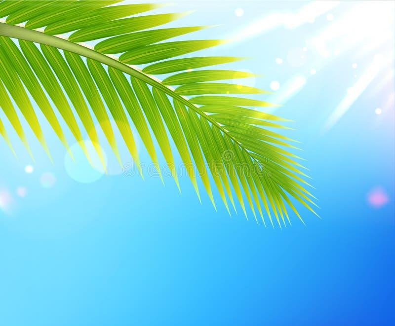 热带背景的夏天 库存例证