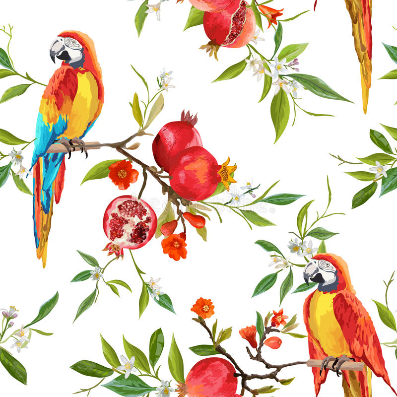 热带花、石榴和鹦鹉鸟背景 向量例证