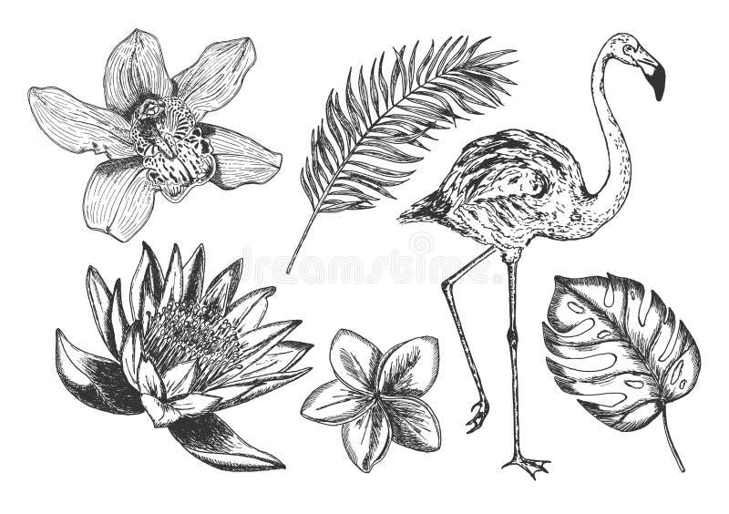 热带花叶子火鸟集合 库存例证