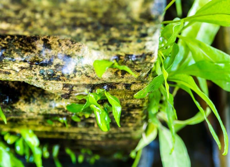 热带花园石头上的新鲜小蕨 免版税库存图片