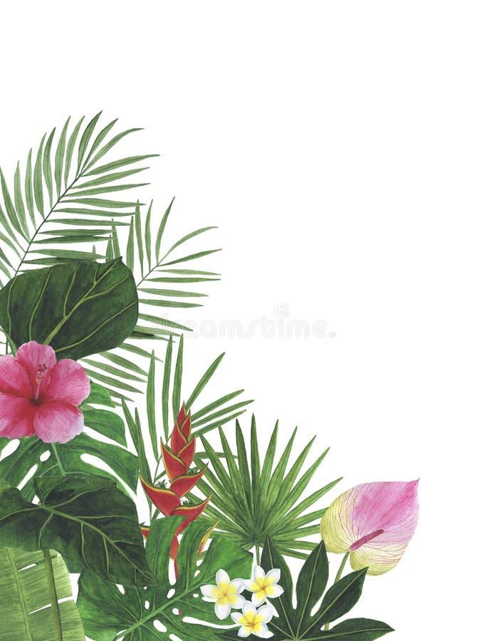热带花木槿水彩例证植物的装饰装饰明信片邀请设计装饰congratul 库存图片