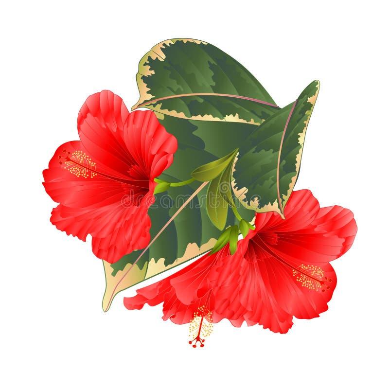 热带花植物布置,与红色木槿和榕属在编辑可能一个白色背景葡萄酒传染媒介的例证 向量例证