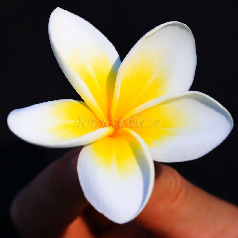 热带花的杏仁奶油饼 库存照片