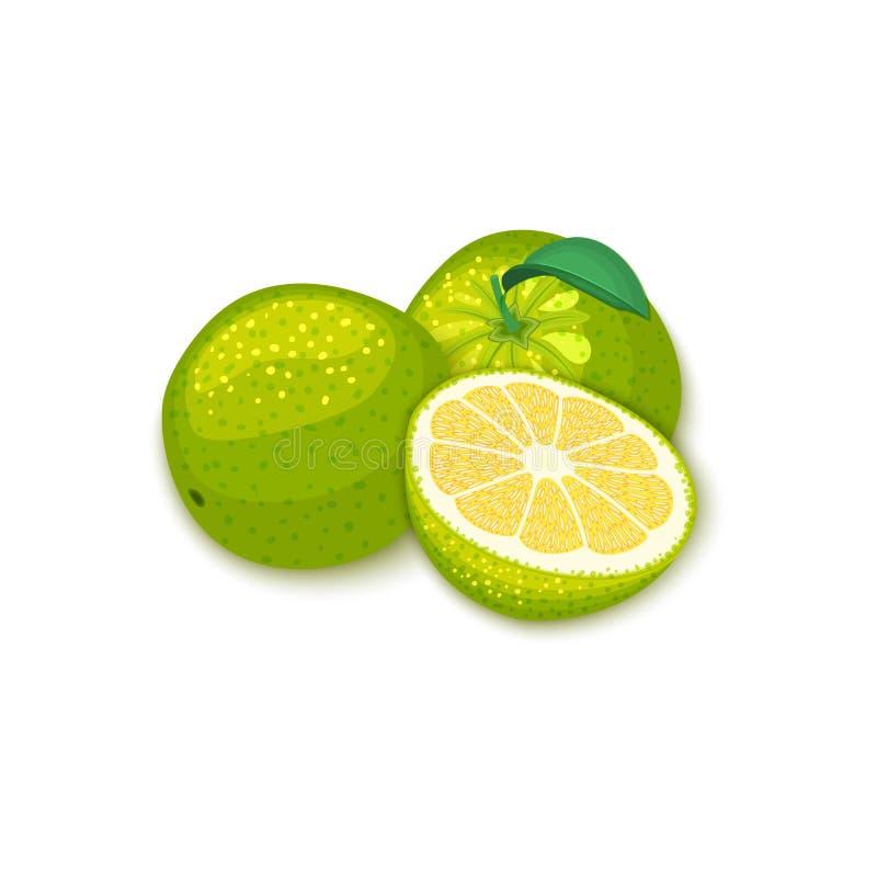 热带葡萄柚果子的构成 传染媒介卡片例证 整个小组成熟传染媒介柑橘柚果子和 皇族释放例证