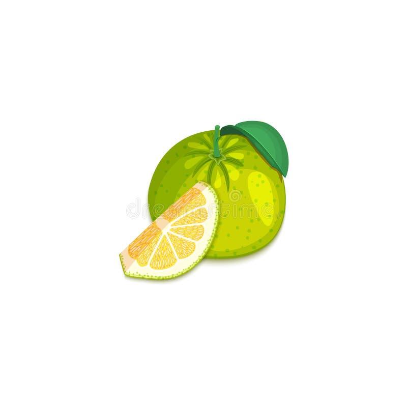 热带葡萄柚果子的构成 传染媒介卡片例证 整个小组成熟传染媒介柑橘柚果子和 向量例证