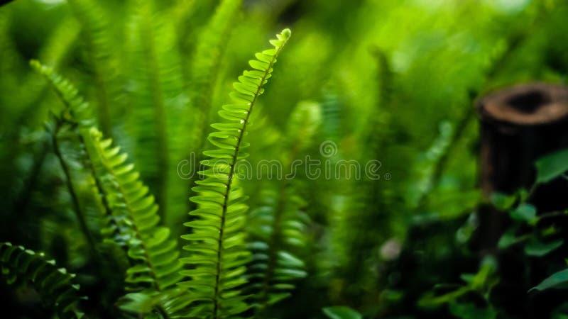 热带蕨背景,减速火箭或者葡萄酒,软的口气,黑暗的口气 E 图库摄影