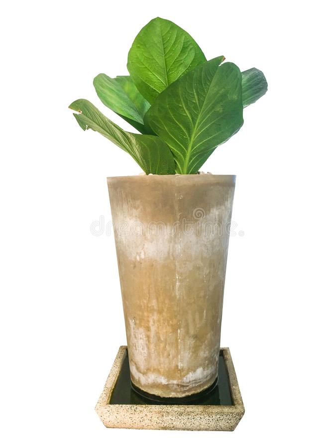 热带被隔绝的棕榈叶和植物 免版税库存图片