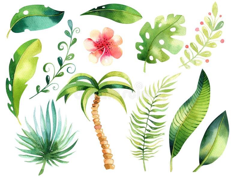 热带被隔绝的例证集合 水彩boho热带papm树,叶子,绿色叶子,图画,异乎寻常的gungle喂 皇族释放例证