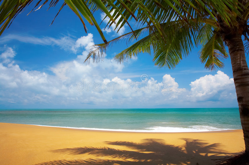 热带视图 库存图片