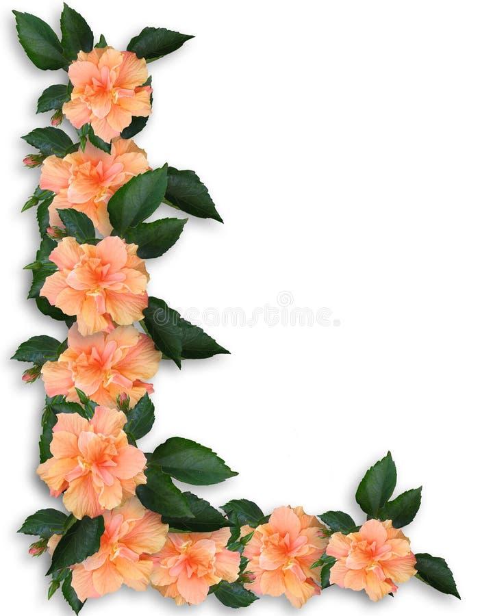 热带边界花卉的木槿 库存例证