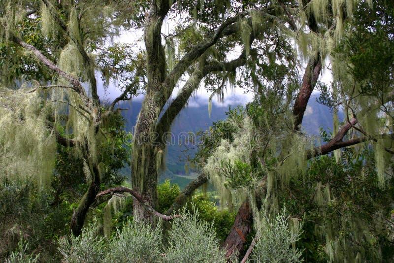 热带植被 库存图片