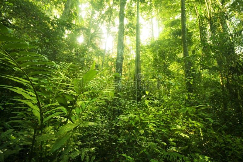 热带雨林横向 免版税库存照片
