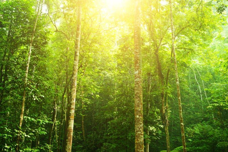 热带雨林横向 免版税库存图片