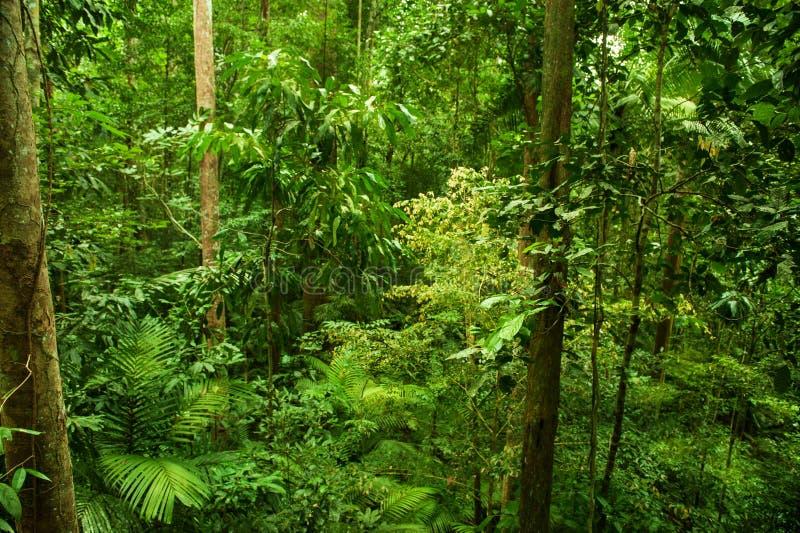 热带雨林横向 库存照片