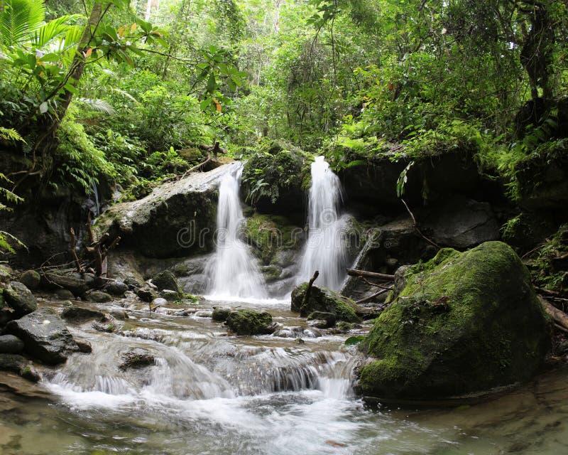热带雨林瀑布在巴布亚新几内亚 库存图片
