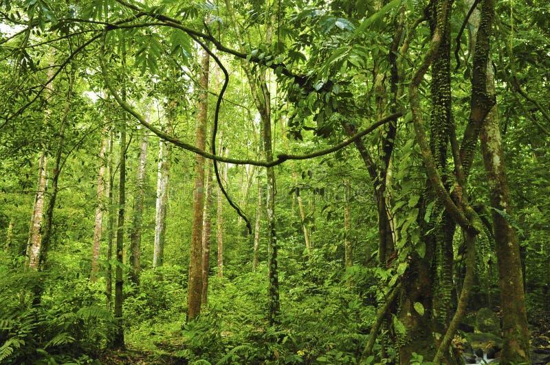 热带雨林风景  免版税库存照片