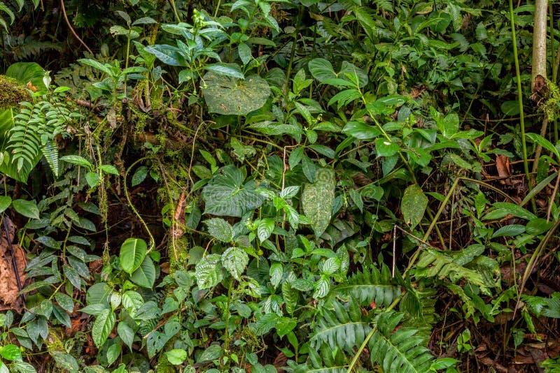热带雨林,似亚马逊密林 库存图片