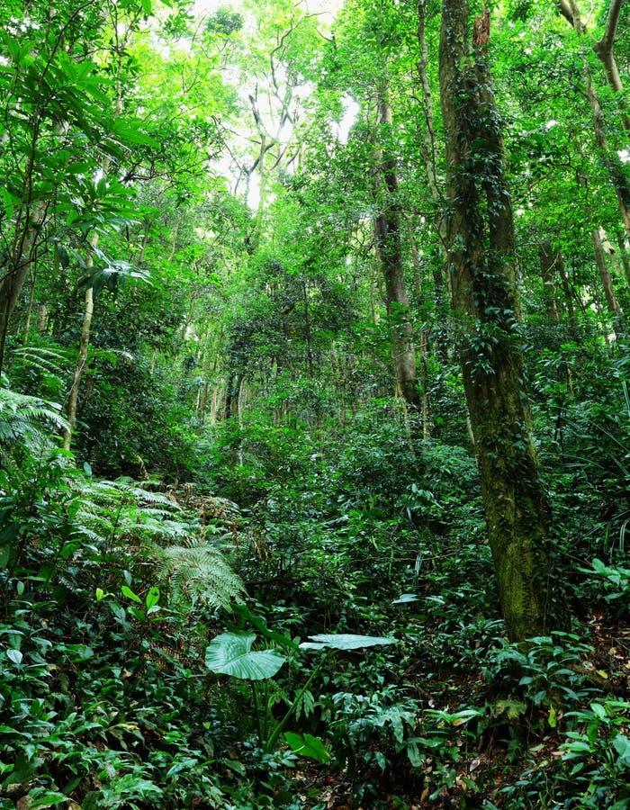 热带雨林 免版税图库摄影