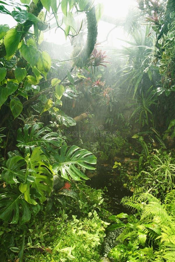 热带雨的雨林 图库摄影