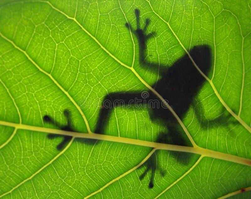 热带青蛙剪影 库存图片