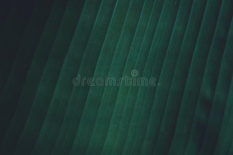 热带香蕉的关闭留下纹理背景 叶子自然深绿口气背景 图库摄影