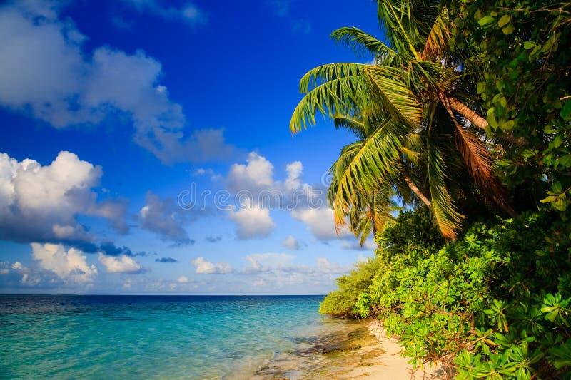 热带马尔代夫的天堂 库存图片