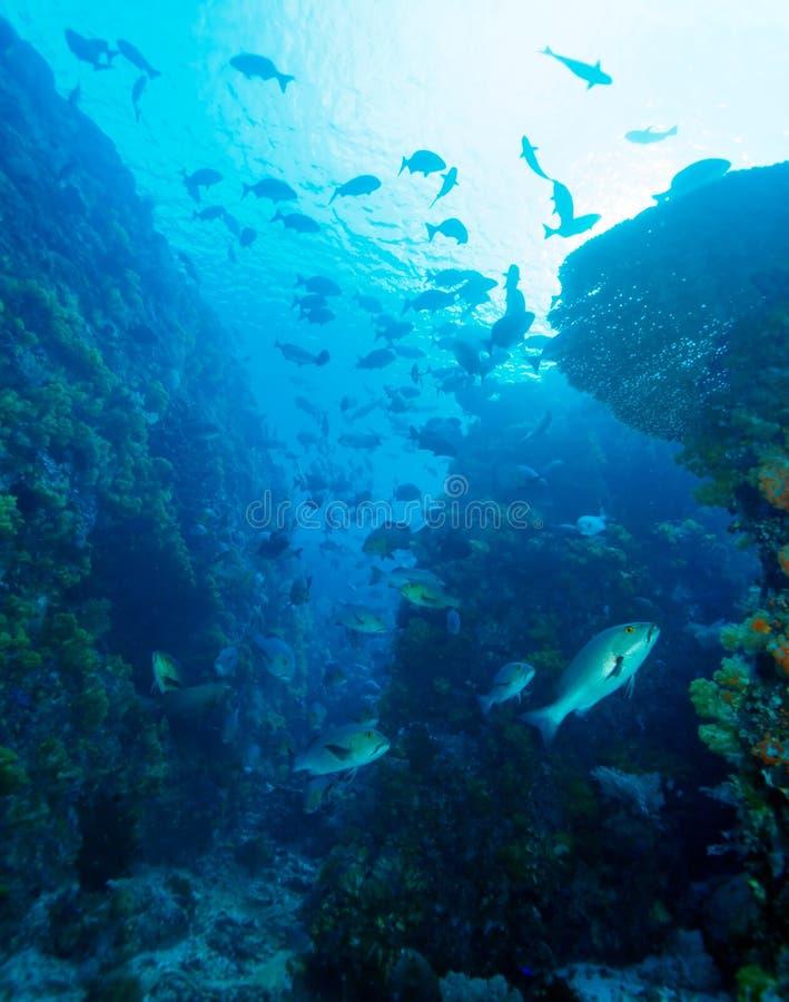 热带鱼临近五颜六色的珊瑚礁 库存照片