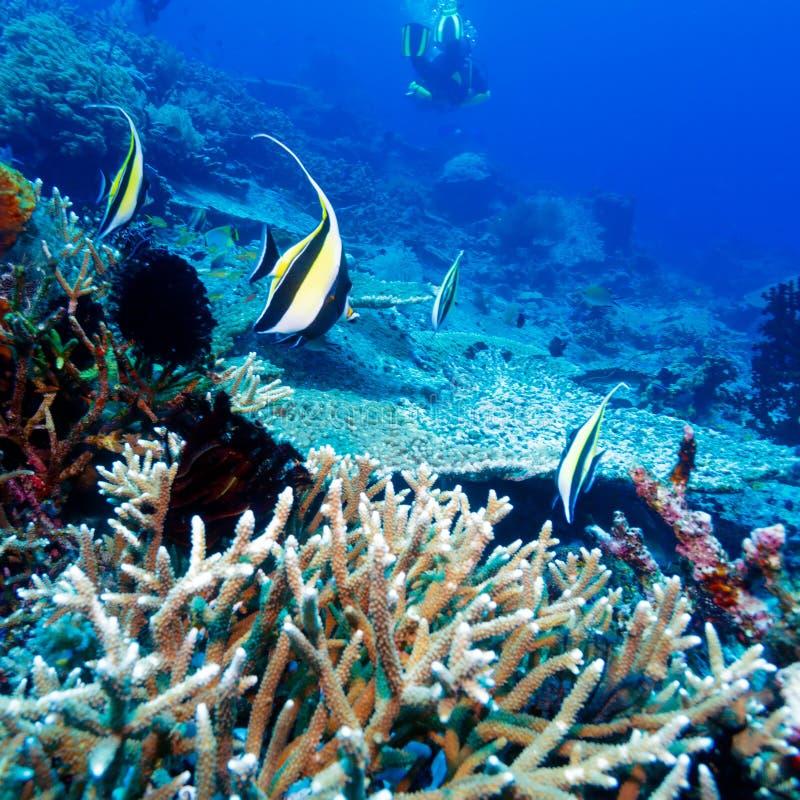 热带鱼临近五颜六色的珊瑚礁 库存图片