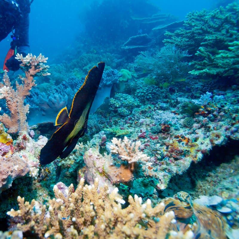 热带鱼临近五颜六色的珊瑚礁 图库摄影