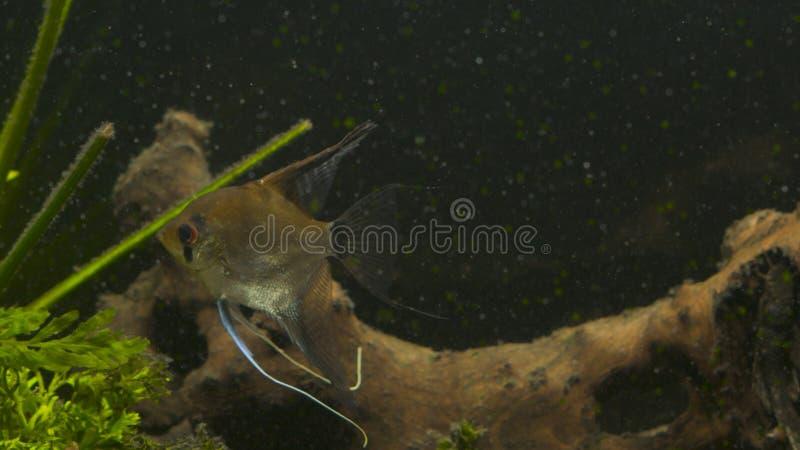 热带鱼在蓝色珊瑚礁海水水族馆见面 水下的天堂 库存照片